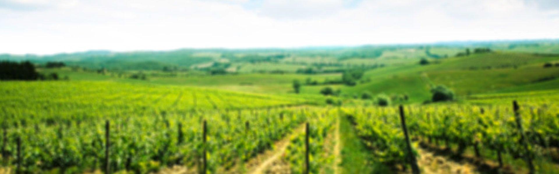 Wein-Aktion: kaufe 3 zahle 2