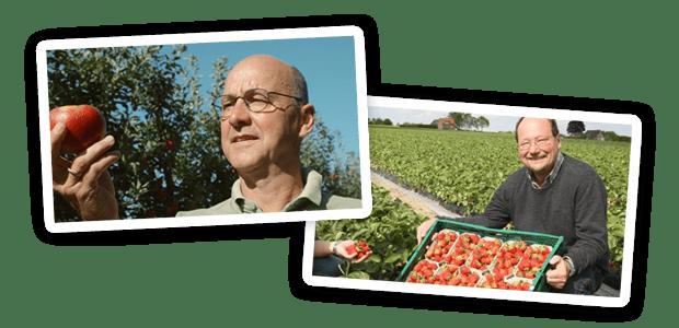 Erdbeeren von regionalen Erzeugern